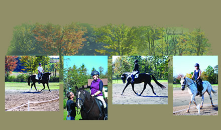 Dressage collage